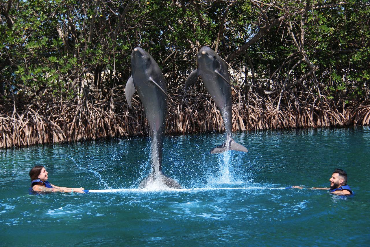DOL_Couple_Swimming_With_Dolphins_High_Jump