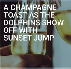 A Champagne Toast As The Dolphins Show Off With Sunset Jump