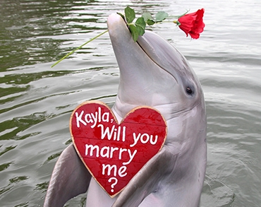 Dolphin holding sign with wedding proposal
