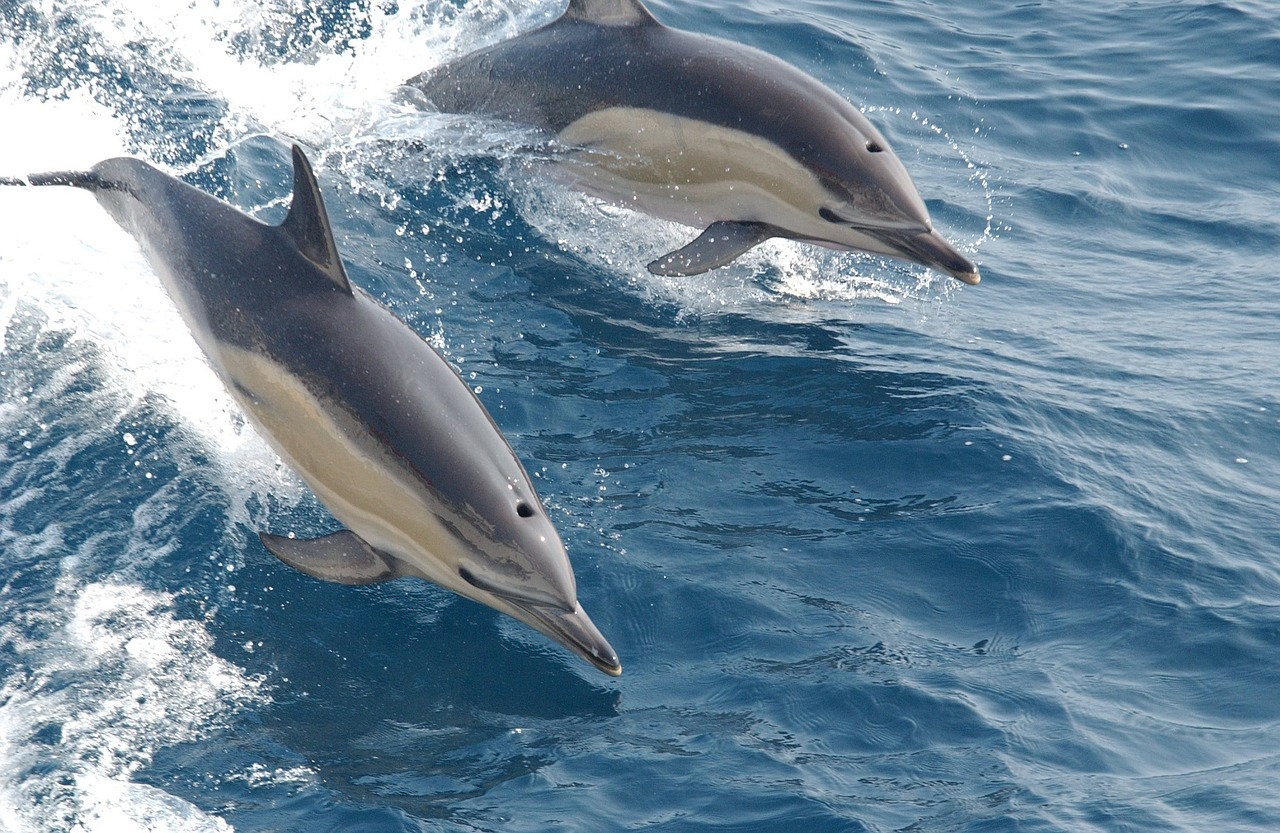 dolphin habitats